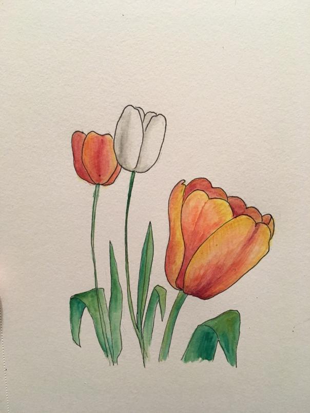 006 tulips