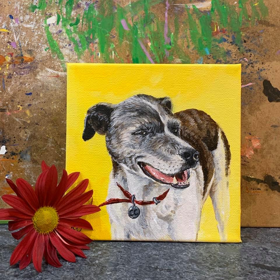 pet portrait cc